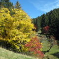 Couleurs d'automne à Champ Laitier||<img src=./_datas/p/r/y/pry1ngdyfn/i/uploads/p/r/y/pry1ngdyfn//2015/10/12/20151012144242-86e88195-th.jpg>