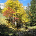 Couleurs d'automne à Champ Laitier||<img src=./_datas/p/r/y/pry1ngdyfn/i/uploads/p/r/y/pry1ngdyfn//2015/10/12/20151012144310-7b3302c3-th.jpg>
