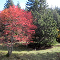 Couleurs d'automne à Champ Laitier||<img src=./_datas/p/r/y/pry1ngdyfn/i/uploads/p/r/y/pry1ngdyfn//2015/10/12/20151012144345-b22d58aa-th.jpg>