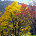 Couleurs d'automne à Champ Laitier||<img src=./_datas/p/r/y/pry1ngdyfn/i/uploads/p/r/y/pry1ngdyfn//2015/10/12/20151012144621-02e8aadd-th.jpg>