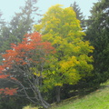 Couleurs d'automne à Champ Laitier||<img src=./_datas/p/r/y/pry1ngdyfn/i/uploads/p/r/y/pry1ngdyfn//2015/10/12/20151012144644-f65614aa-th.jpg>