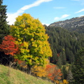 Couleurs d'automne à Champ Laitier||<img src=./_datas/p/r/y/pry1ngdyfn/i/uploads/p/r/y/pry1ngdyfn//2015/10/12/20151012144702-4c708116-th.jpg>