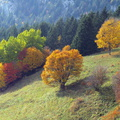 Couleurs d'automne à Champ Laitier||<img src=./_datas/p/r/y/pry1ngdyfn/i/uploads/p/r/y/pry1ngdyfn//2015/10/12/20151012144837-0afca08e-th.jpg>